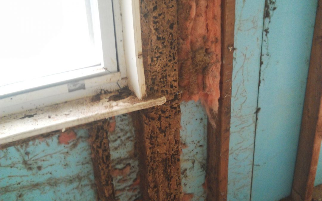 Termites are in full swing Huntington